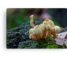 Fungi No1 Canvas Print