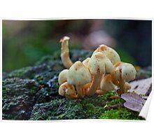 Fungi No1 Poster