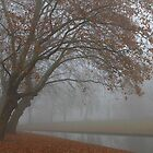 Fog-filled Oranjepark by Stephanie Owen