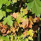 Autumn Leaves (Twycross) by CreativeEm