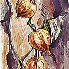 Physalis alkekengi (Bladder cherry, Chinese lantern, Japanese lantern, or Winter cherry)  by Linandara