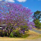 Jacaranda tree by Margaret Stanton