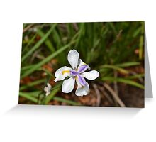 Feeling Refreshed after the rain Greeting Card