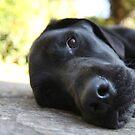 Sleepy Boy by Darren Buss