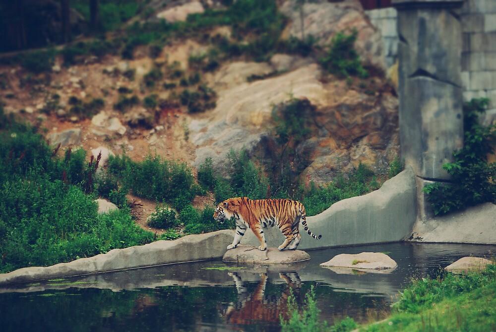 Tiger, tiger burning bright., by subtitulo