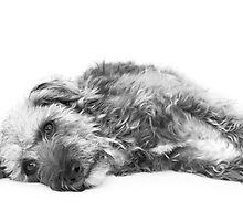 Cute Pup Lying Down by Natalie Kinnear