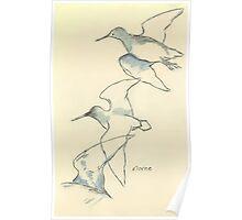 Sketching birds Poster