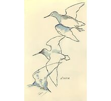 Sketching birds Photographic Print