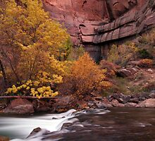 Fall Colors in Zion's Temple of Sinawava by A.M. Ruttle