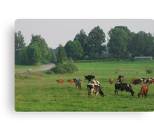 Cows herd. Canvas Print