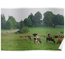 Cows herd. Poster