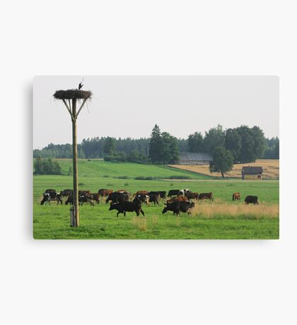 Cows herd Canvas Print