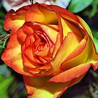 Burning Rose by Clive