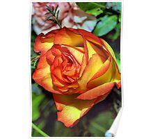 Burning Rose Poster