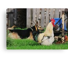Rural landscape with farm animals. Canvas Print