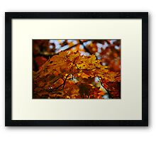 Fall Sun and some leaves. Framed Print