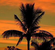 Floride, The Sunshine State ~ Part Five by artisandelimage