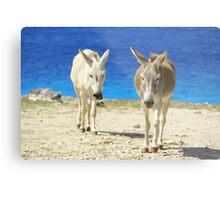 Bonaire donkeys Metal Print