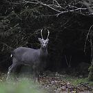 Deer at Baroncourt  by MiskellyTrevor