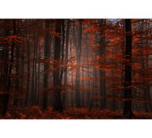 Spititual Wood Photographic Print
