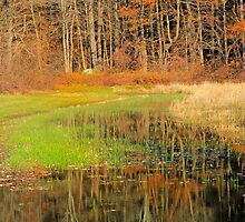 Foliage and water by john forrant