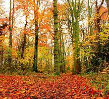 Autumn Tints, Baydale Beck,Darlington,England by Ian Alex Blease