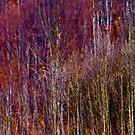 Painting by autumn made in Brown Sugar . Favorites: 1 Views: 67 . Toda raba ! Thx ! Danke ! Muchas gracias ! Ole ! by © Andrzej Goszcz,M.D. Ph.D