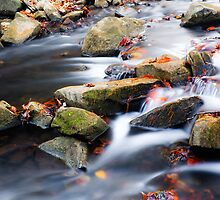 Rocks and Leaves by Greg Booher