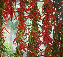 Strung and Hanging Red and Green Chili Peppers Drying by taiche