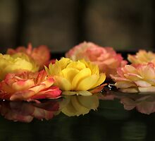Flowers, Trees and Gardens by Mandy Gwan