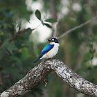 Beautiful Blue by cathywillett