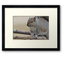 Squirrel on Branch Framed Print