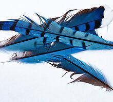 Feathers 2 of 3 by Greg Booher