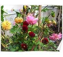A garden of Dahlia delights\ Poster
