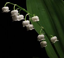 One Lily of the Valley by EbyArts