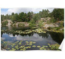 Kristiansand.  Waterlilies on lake.  Poster
