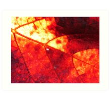 Fire in Light Art Print
