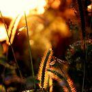 Damsel & Dragon by Katie WIsniewski