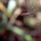tangled web by Katie WIsniewski