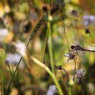 Dandilions and dragonflys by Katie WIsniewski