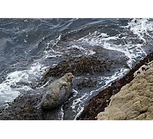 Harbor seal, Cypress Cove, Point Lobos Photographic Print