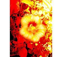 WOW Photographic Print