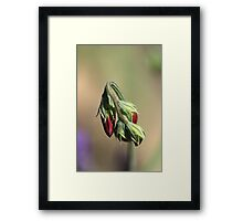 Split Pea Framed Print
