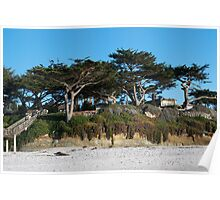 Kite-eating tree and white sand, Carmel Poster