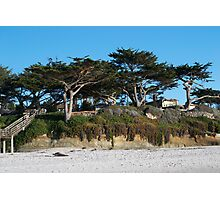 Kite-eating tree and white sand, Carmel Photographic Print