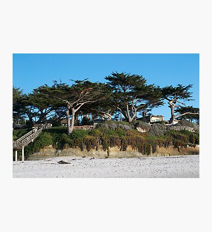 Kite-eating tree and white sand, Carmel Photographic Print