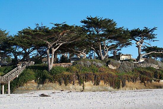 Kite-eating tree and white sand, Carmel by Shymala Dason
