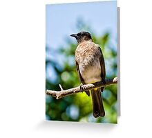 Today 24th Nov  Bird 1 Greeting Card