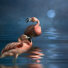 Flamingo Moon by Tarrby