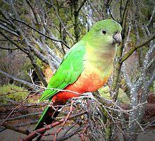 Burradoo Birdie by George Petrovsky